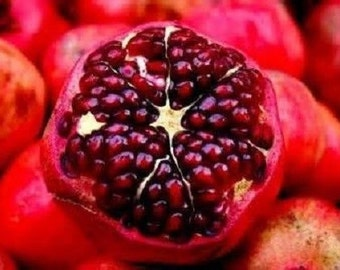 10 Dwarf Sweet Pomegranate Seeds-1056