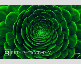 Green Spiral. Fine Art Giclée Canvas Wrap