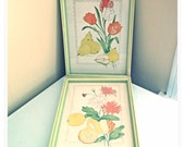 Pair of Drawings Signed Pictures Flowers Fruit Framed Lime Green