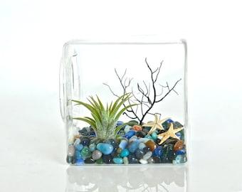 Ocean Theme Air Plant Glass Cube Terrarium, Ocean Decor, Ocean Decoration, Sea Decor, Ocean Table Decor, Sea Home Decor, Sea Home Decoration