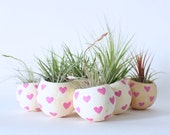 Air Plant Planter with Air Plant - Pink Hearts