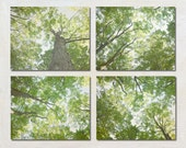 8x10 Nature Photographs Set, Photo Set of Four Prints, Green Wall Art, Tree Photography, Forest Fine Art, Chartreuse Green Home Decor