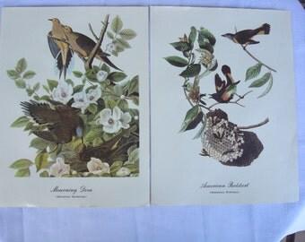 Audubon Best Loved Bird Paintings (Set 2) Color Prints. American Redstart, Dove