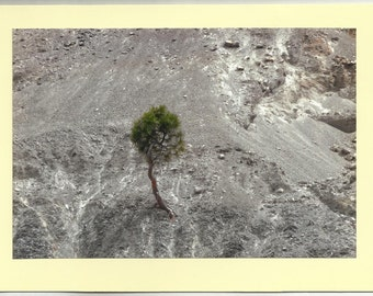 LONE PINE, Dooley Mtn - Original Outdoor Scenery / Local Artist Digital Photo - Blank Photo Card Twin Fold Design - In Stock
