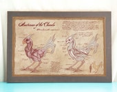 Anatomy of the Chocobo // Final Fantasy Art // Geeky Art Print // Game Art // Geeky Home Decor //  Gift for Geek // Gamer Home // Nerdy Home
