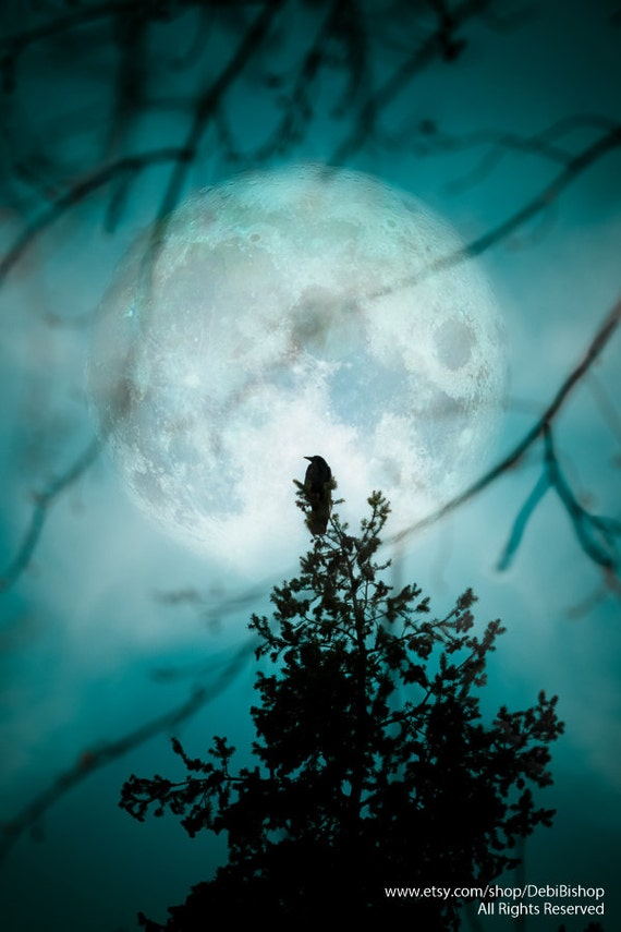 Full Moon Raven Bird Crow Winter Silhouette Nature Cyan Teal Blue Black