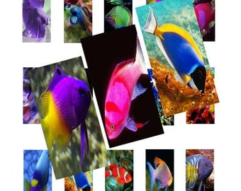 Colorful Fish 1x2inch Domino Images Digital Collage 025