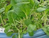 Pak Choi Heirloom Chinese Cabbage Seeds Oriental Greens Non GMO
