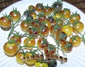 Amethyst Cream Cherry Indigo type Tomato Seeds - SALE ITEM