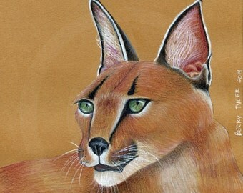 African Caracal Original Drawing