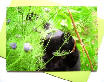 "Very attractive postcard and its envelope of color matched "" Hidden in Herbs ""."