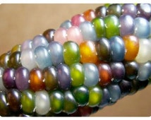 50% off! Authentic Heirloom Glass Gem Corn Seeds, Native American Heritage, Cherokee, Highly Sought After, Organically Grown