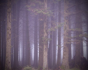 Forest photo, trees, woods, foggy, misty, surreal art, purple lilac mauve