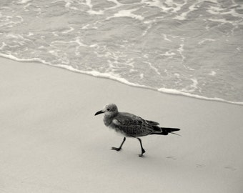 Shore Bird, Black and White Photography, Fine Art Photography