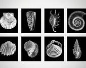 Beach House Gallery, Black White Wall Art, Black Coral Seashell Print Set of 8, Seashell, Black Wall Art, Nautilus Shell,White Black Art