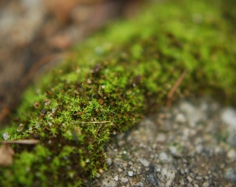 Moss on Concrete photo