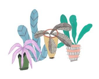 Pots and plants Illustration. Print. Wall art. Illustration and drawing. Home decor. illustration.