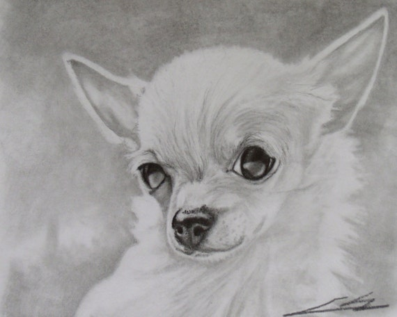 Artículos Similares A Chihuahua Blanco Y Negro Grafito