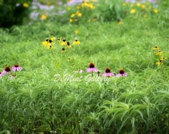 Blooming Wild Landscape Print KP153