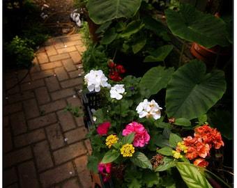 Flower Walkway Digital Download