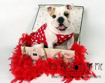 Card #56 / Bullytine ~ English Bulldog Valentine's Day Greeting Card