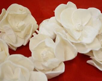 Sola Magnolia-12 Pieces