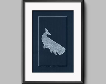 Physeter macrocephalus. Original screenprint. Sperm whale.