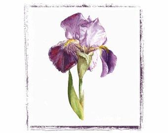 Iris Watercolor Handmade Greeting/note Card Set
