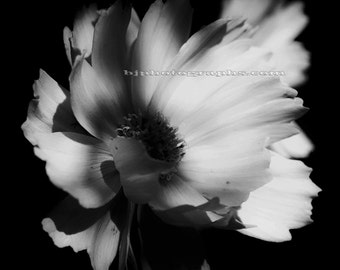 set of 4 black and white prints flower photography set nature art decor 12 x 12 inch ready for ikea ribba pre matted 20x20 inch frame
