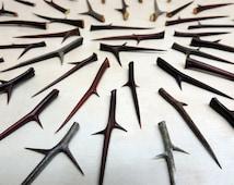 "30 Honey Locust Thorns ~ Sizes 3""- 4"" ( 76.2mm - 101.6mm ) long / Ceremonial, Woodworking, Crafting, Wedding Decor, Southwest"