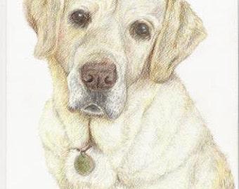 Custom Pet Portrait A4 Colour Pencil