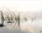 Outdoor photography - Morning mist and sea grass