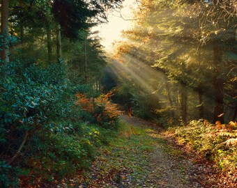 Landscape photo of Huntshaw Woods, taken early in the morning, lovely autumn photo