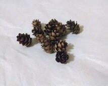 Hemlock Cones, 50 pieces, small cones, craft rustic supplies