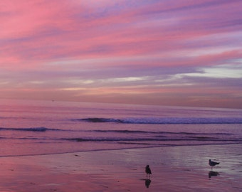 A Subtle Sky, Pastel Purple and Pink Sunset, Seagulls, Carlsbad, California