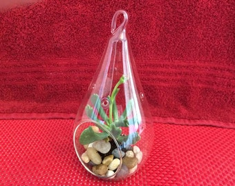 Succulent Plant Large Glass Raindrop Terrarium