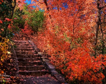 Nature Photography Print, Landscape Photo, Nature Wall Art, Staircase Photograph, Fall Colors, Autumn Photograph, Outdoor Picture