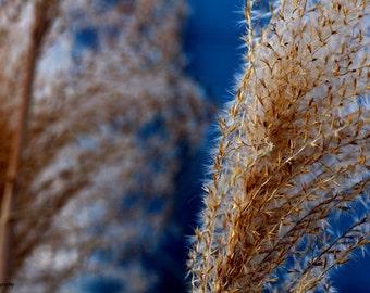 Nature Photography, Flower Art, Macro Photography, Fine Art Photography, Flower Photography