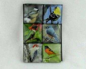 Set of Six Magnets Adorable Beautiful Birds