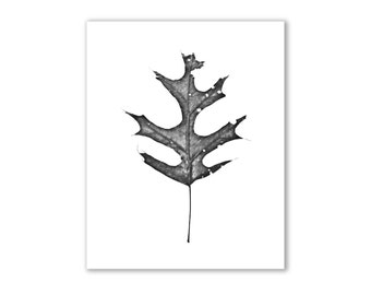 "Leaf Photography, Nature Art, - ""The King of the Forest"""