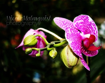 Bright Orchid-Flower-Nature-Color-Macro-Fine Art Photography-Plant
