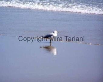Seagull Photography Nature Photography Reflection Beach Ocean Waves Seagulls Wall Art Home Decor Photograph Birds Fine Art Photograph Print