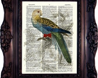 Parrot Dictionary art print. Vintage Art Print. Print on Book Page. Parrot from Natural History. 19. century. Dictionary print. Code:380