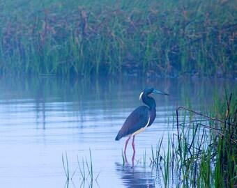 Foggy Morning Heron - Photographic Print on Canvas, Wildlife, Florida, Fog, Nature Scene