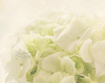Dreamy White Christmas Rose