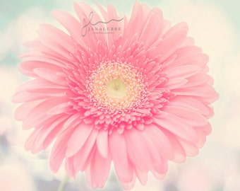 Dreamy Pink Diasy