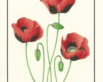 Set of 4 Poppy Cards