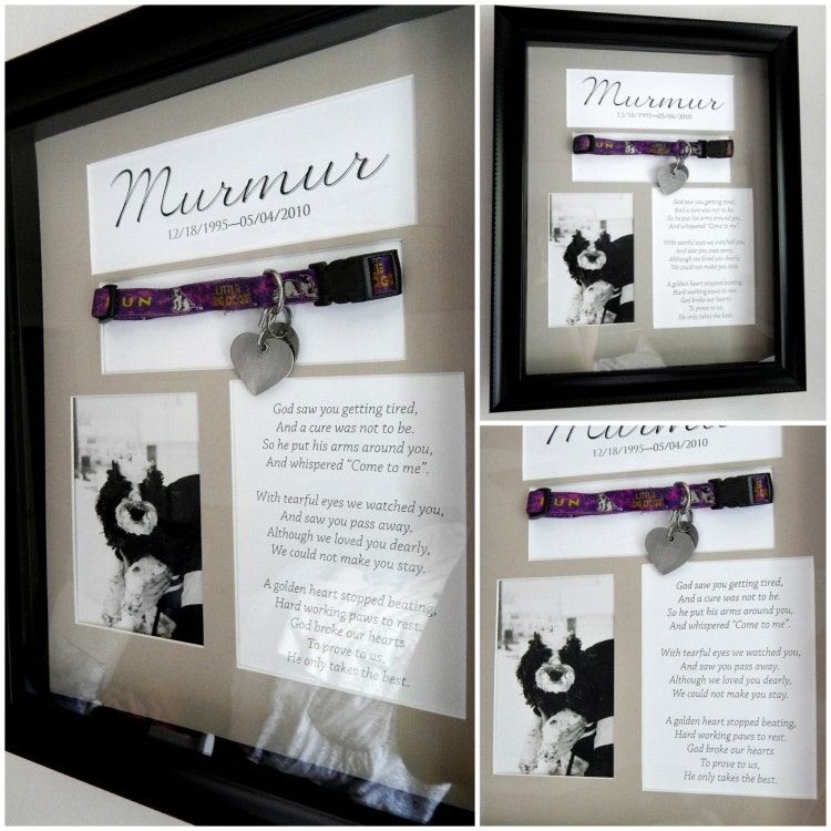 Pet Memorial Shadow Box With Collar By Allpetsgotoheaven