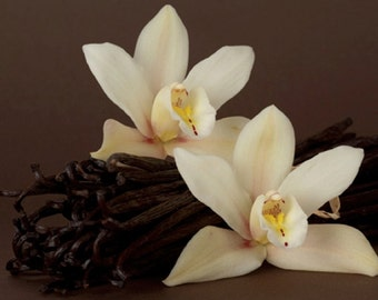 Vanilla Absolute - Pure Essential Oil
