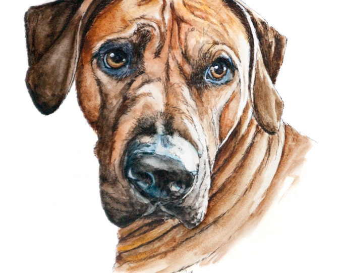 "5"" x 7"" Watercolor sketch of your pet from photo"